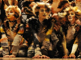 'Cats' (Photo: Alessandro Pinna)
